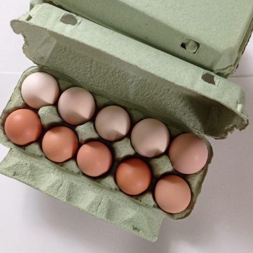 Mājas vistu olas
